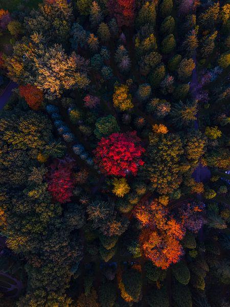 Herfst van boven van Thomas Bartelds