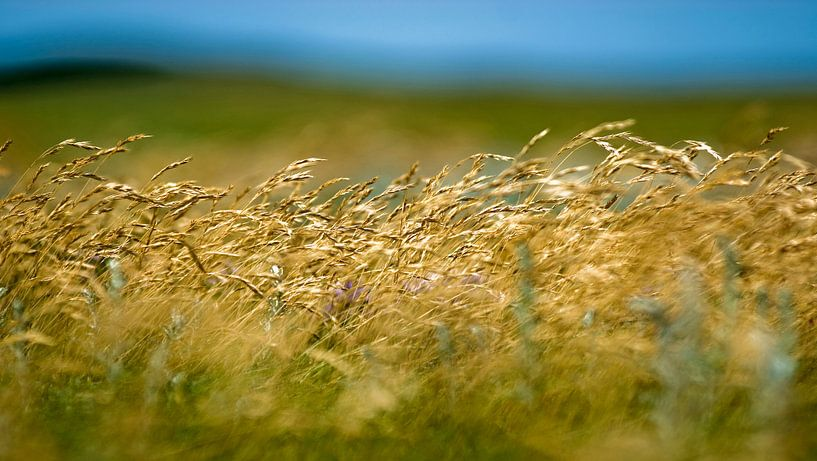 Wuivend gras van Margo Schoote