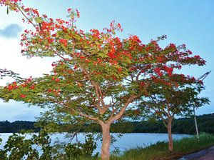 Thailand Tree van