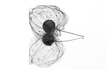 lampionplant Physalis alkekengi van Fotografie Sybrandy