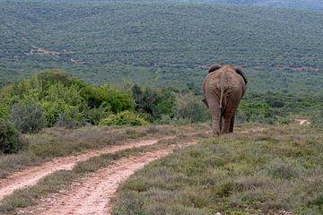 Elefant auf der Straße von jacky weckx