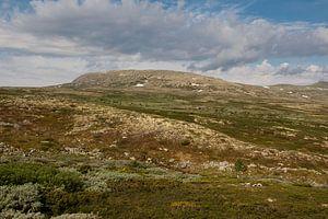 De natuurlijke vloerbedekking / The Most Natural Mountain Cover van