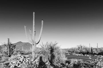 Landschaftsimpression aus dem Saguaro National Park | Monochrom von Melanie Viola