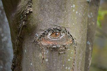 Baum mit Blick auf die Rinde. Spezielle bizarre Natur. von Ronald H