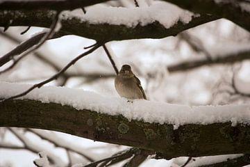 Winter Bird van Anneke Verweij