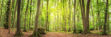 Waldpanorama - Waldweg im grünen Wald von Tobias Luxberg