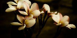 Abstrakte Leelawadee Blüte