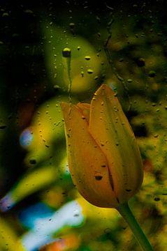De bloem en de regen van Marinescu Dan