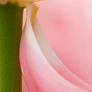 abstracte tulp van Maura Klumper