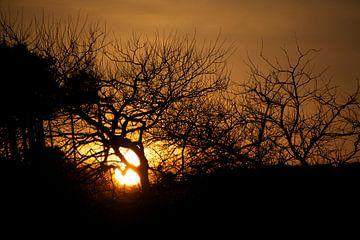 Dutch Fire-Sunset van Maria Tamburri