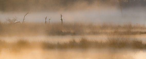 Strabrechtse Heide 237