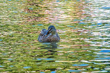Psychedelic Duck van Frans Blok