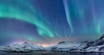 Aurores boréales sur les îles Lofoten en Norvège sur Sjoerd van der Wal
