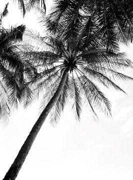 Schwarz-Weiß-Foto von Palmen von Bianca ter Riet