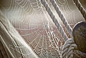 Tau und Spinnennetz auf dem Segelboot