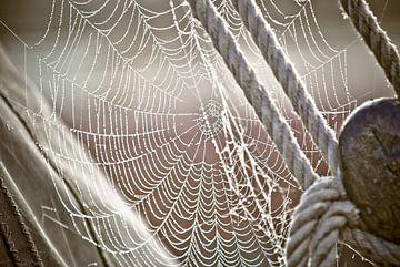 Dauw en spinnenweb op zeilboot van Fotografiecor .nl