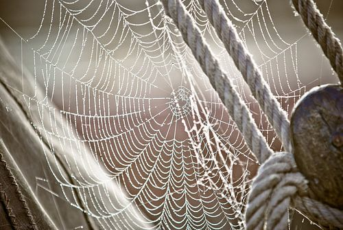 Dauw en spinnenweb op zeilboot
