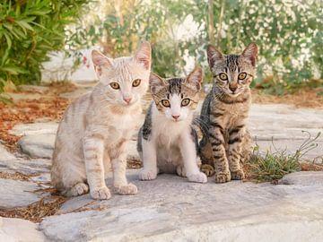 Drei Babykatzen in einer griechischen Gasse von Katho Menden