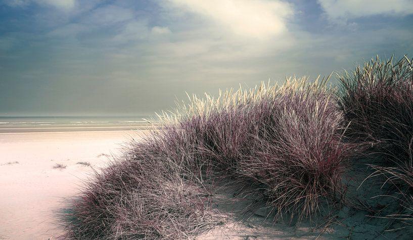 2891 Dune grass van Adrien Hendrickx