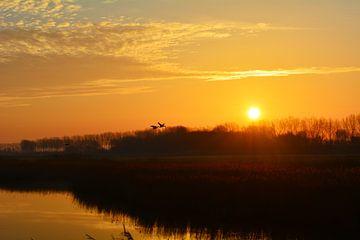 ochtendvlucht von Marjolijn de Jongh