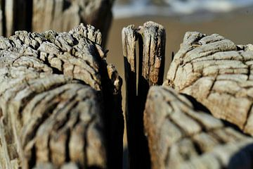 Verweerde paal op het strand van Blond Beeld