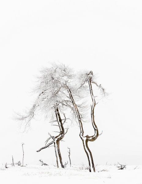 Winter Hoge Venen van Steven Hendrix