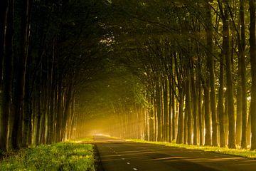 Zonlicht door de bomen van Dennis Bresser