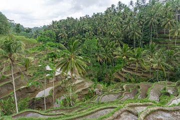Rijstvelden en palmbomen op Bali van Reis Genie