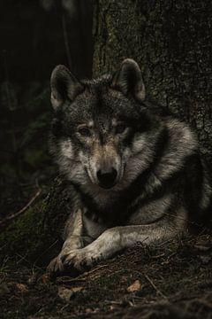 Wolf von Lars Hoppe