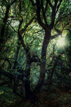 Schrullige Bäume von Joris Pannemans - Loris Photography