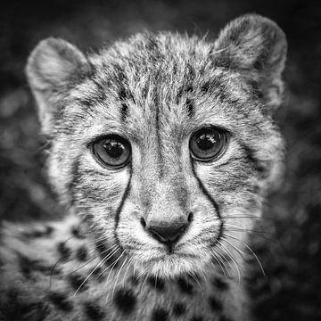 Porträt eines jungen Geparden von Frans Lemmens