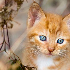 Nieuwsgierige blauwe ogen sur Ivon Hamers