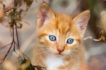 Nieuwsgierige blauwe ogen von