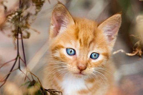 Nieuwsgierige blauwe ogen van