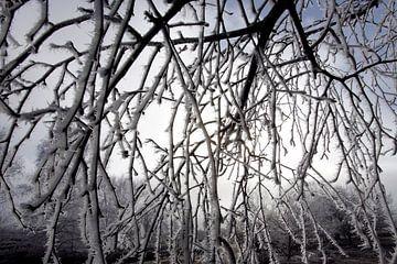 Freezing fog sur Luuk van der Lee