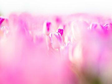 Tulpen in bloei van Dennis Janssen