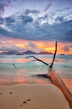 Farben der Seychellen von Silvio Schoisswohl