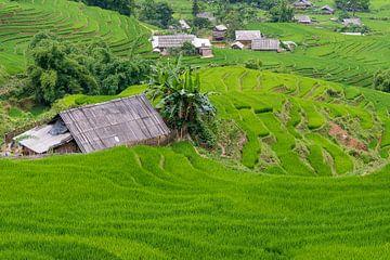Rijstvelden in Vietnam van
