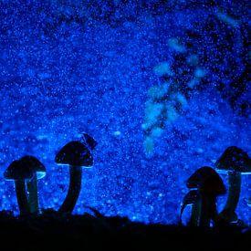 Magical forest von Richard Guijt Photography