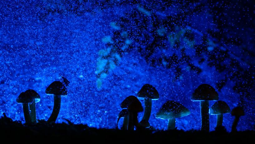 Magical forest van Richard Guijt