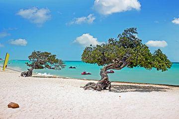 Divi divi-Bäume auf Aruba in der Karibik von Nisangha Masselink