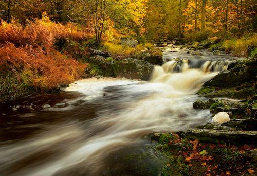 Volop herfst aan de rivier de La Hoegne in de Hoge Venen in de Ardennen. van Jos Pannekoek