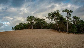 Landschap Loonse en Drunense Duinen van Marjolein van Middelkoop