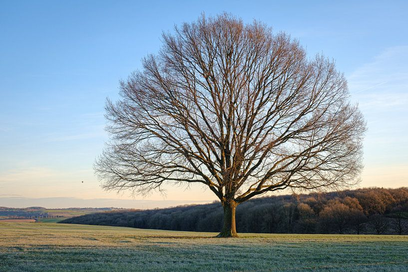 Baum im Feld von Johan Vanbockryck