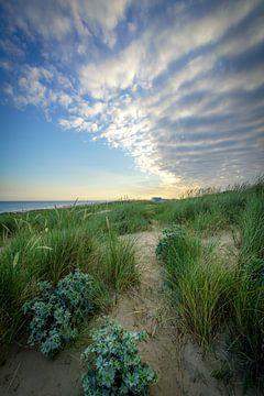 Duin, zee in Nederland van Dirk van Egmond