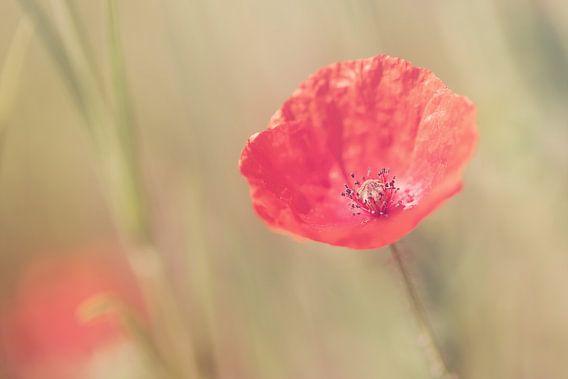 Memories of Summer van LHJB Photography