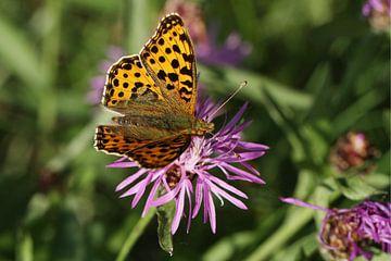 Kleine paarlemoervlinder vlinder van Anja Bagunk