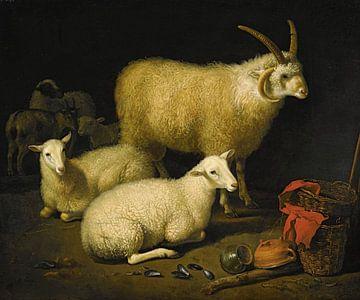 Aelbert Cuyp, Schaf, 1600er Jahre von Atelier Liesjes
