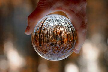 Nature in a magic Bal sur Bert Heuvels