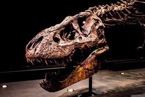 Skelet Tyrannosaurus Rex van Jorn Wilms